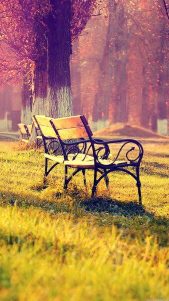 hình ảnh ghế đôi trong công viên mùa thu