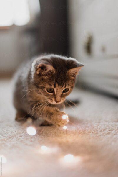 hình ảnh mèo buồn dễ thương