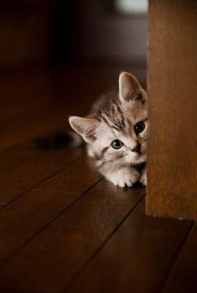 hình ảnh mèo buồn dễ thương và cute