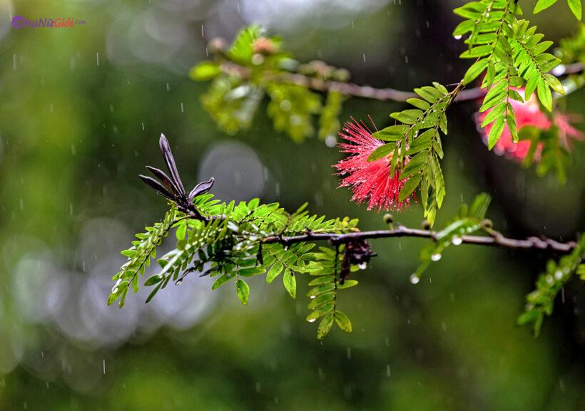 hình ảnh mưa rơi đẹp lãng mạn nhất