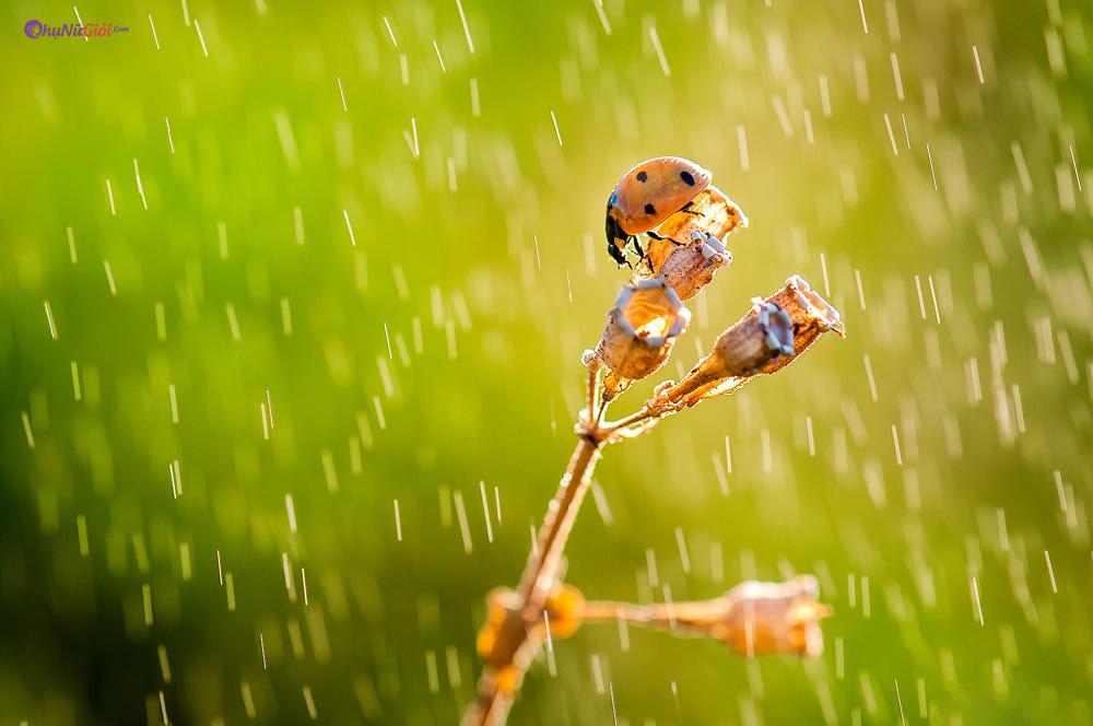 hình ảnh mưa rơi đẹp