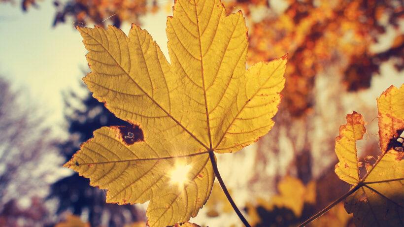 hình ảnh mùa thu lá vàng