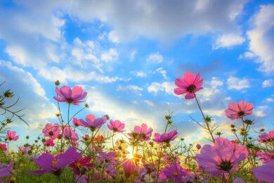 hình ảnh mùa xuân tươi đẹp