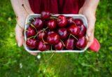 hình ảnh quả cherry xinh xắn