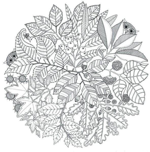 Hình vẽ những cành cây hoa quả và những con cú mèo dành cho người lớn