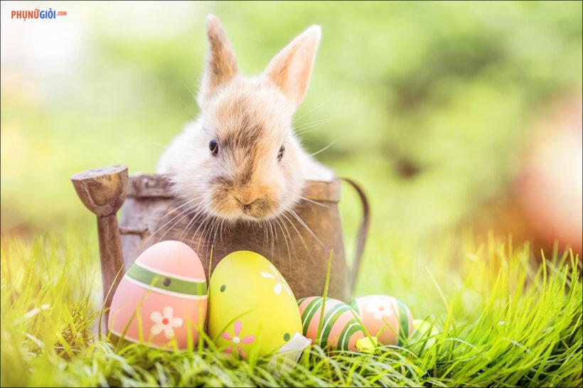 ảnh con thỏ