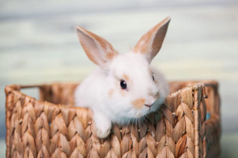 ảnh con thỏ bên chiếc giỏ