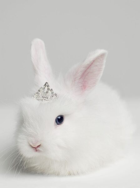 ảnh con thỏ đeo vương miện