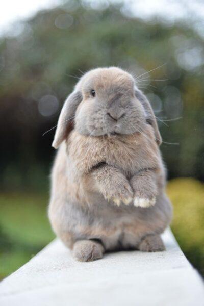 ảnh con thỏ đốn tin người xem