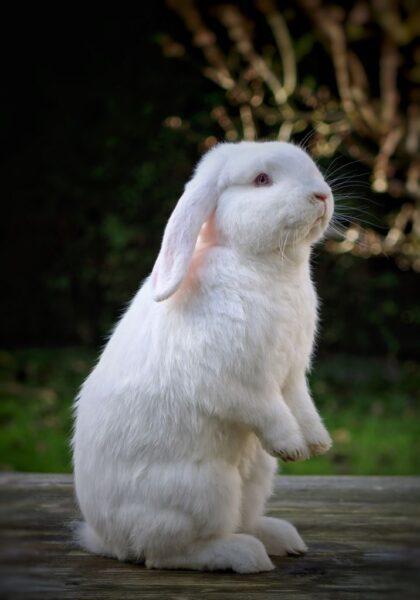 ảnh con thỏ đứng bằng 2 chân