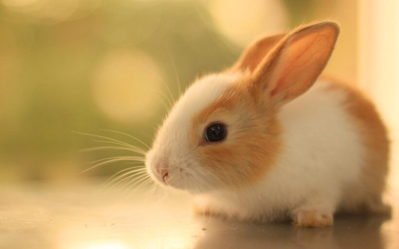 ảnh con thỏ nâu xinh xắn