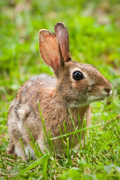 ảnh con thỏ ngơ ngác