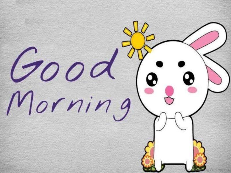 hình ảnh ngộ nghĩnh thỏ trắng cute