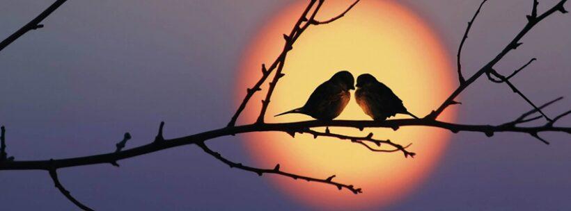 ảnh bìa tình yêu cho facebook - hai chú chim