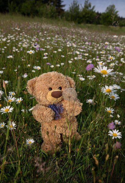 Hình ảnh gấu bông trong vườn hoa đẹp