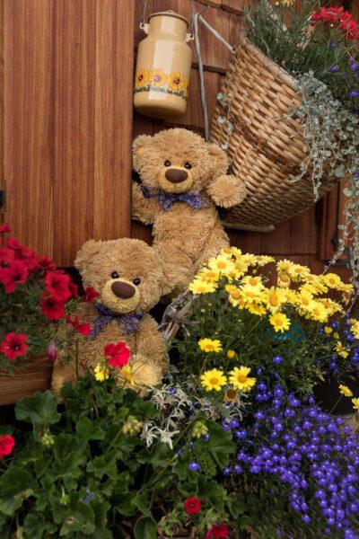 Hình gấu bông và hoa đẹp