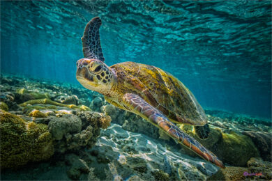 Hình ảnh con Rùa đẹp, sắc nét nhất