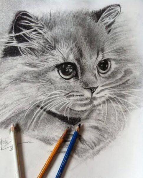 Vẽ tranh đẹp bằng bút chì hình con mèo
